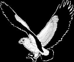 Novita Falco96